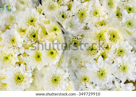 Closeup photo of hundreds of white daisy flowers wrapped on local market  - stock photo