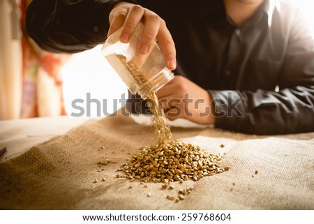 Closeup photo of male miner emptying jar with golden nuggets - stock photo