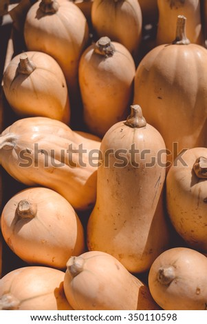 Closeup photo of ripe edible orange long shaped pumpkins with scapes - stock photo