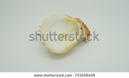 Closeup photo of seashell isolated