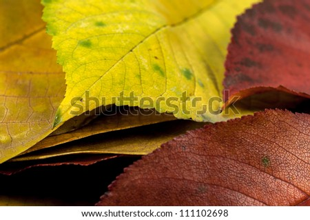 Closeup photo of some autumnal leaves - stock photo