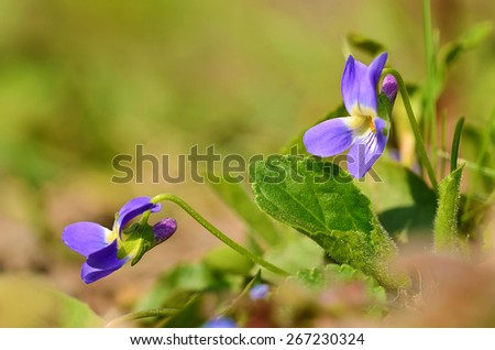 Closeup photo of violet flowers a sunny day - stock photo