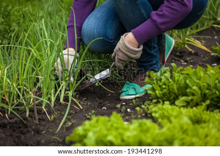 Closeup photo of woman digging out onion with spade - stock photo