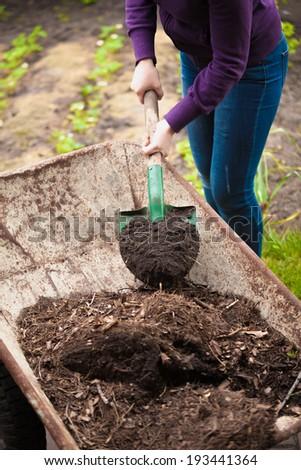 Closeup photo of woman taking compost from wheelbarrow with shovel - stock photo