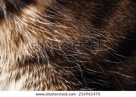 Closeup photograph of domestic pet cat fuzzy fluffy fur, tabby color breed, texture background - stock photo
