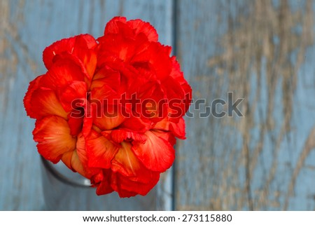 closeup picture of a carnation on turquoise vintage wooden background with copy-space - stock photo