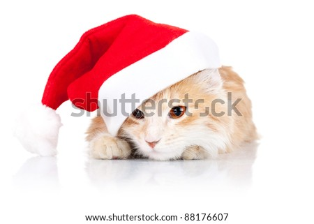 closeup picture of a cute cat wearing a santa hat over wite background - stock photo