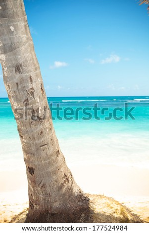 closeup picture of a palm tree trunk and beautiful caribbean sea with white sand beach as background - stock photo