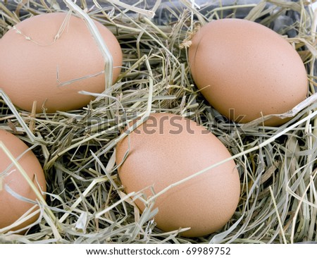 Closeup picture of fresh eggs lying on hay