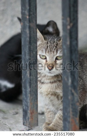 Closeup picture of homeless cat - stock photo