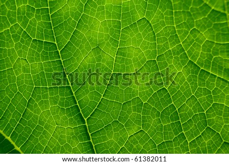 Closeup plant texture - stock photo