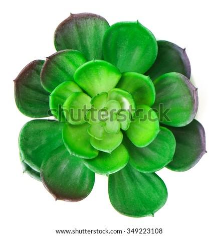 Closeup Plastic Succulent Cactus Plant is on white bakcground - stock photo
