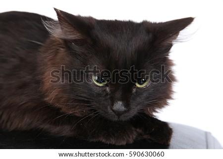 Closeup Portrait Angry Black Cat On Stock Photo 599550425 ...