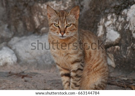 closeup portrait of a beautiful striped cat with expressive eyes
