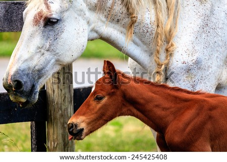 Closeup portrait of a mare and her baby colt - stock photo