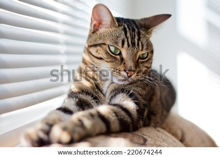 Closeup portrait of cute adorable tabby cat with stripes and yellow eyes lying on sofa couch on sunny day. Selective focus.  - stock photo