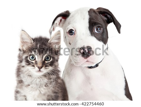 Closeup portrait of cute black and white young puppy and kitten together looking into camera - stock photo