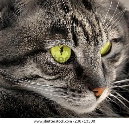 Closeup portrait of green-eyed cat - stock photo