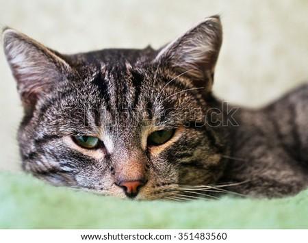 Closeup portrait of green-eyed cat. - stock photo