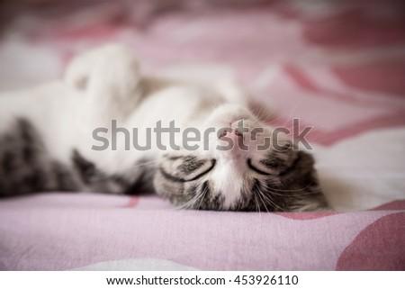 Closeup portrait of sweet sleep white-gray kitten - stock photo