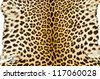Closeup real tiger fur - stock photo