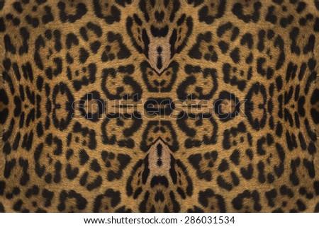 Closeup real tiger fur - stock photo
