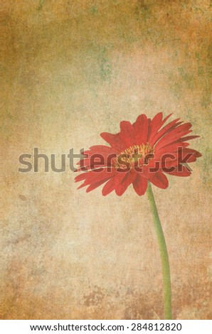 Closeup retro vintage background with red gerbera flower. Aged yellowed wallpaper  - stock photo