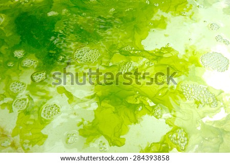 closeup seaweed in seaweed farm - stock photo