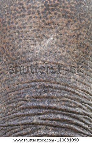 closeup shot of an elephant skin (forehead and nose)