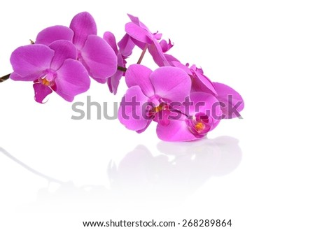 Closeup shot of pink orchid with relfection,shadow isolated on white background