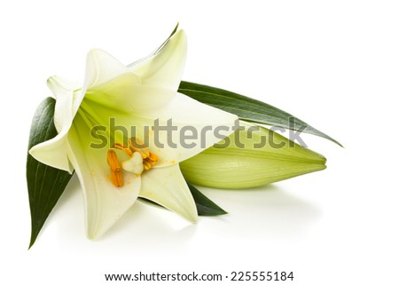 Closeup shot of white lily isolated on white background. - stock photo
