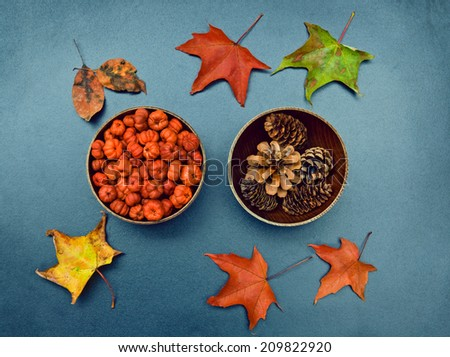 Closeup still life of two wooden bowls with tiny orange pumpkin pods, pine cones and colorful autumn birch and maple leaves around. Autumn, Fall, Halloween concept. Grungy frame, background, card. - stock photo