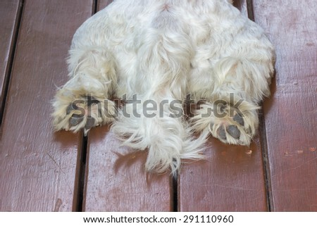 Closeup tail and paws of white dog lying on floor - stock photo