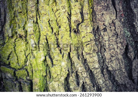 Closeup texture of old green tree bark, detailed photo background with retro toning correction filter, instagram vintage style - stock photo