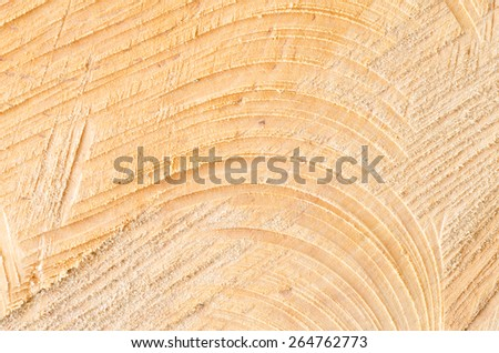 closeup to cut tree trunk texture background