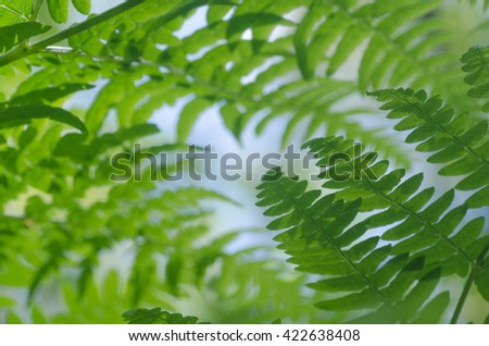 closeup to green fern leaves - stock photo