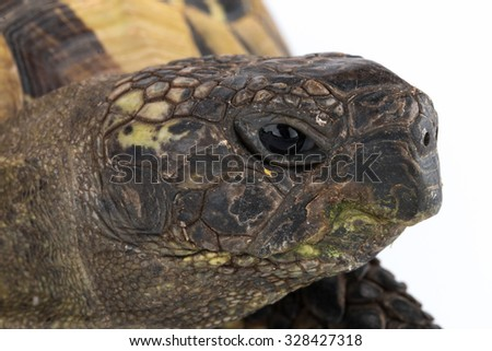 Closeup tortoise head - stock photo