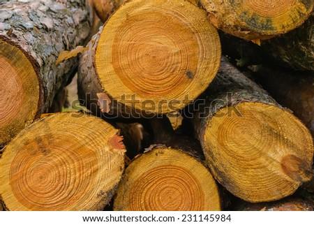 closeup tree logs - stock photo