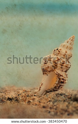 closeup tropical shell on sandy sunny beach, natural vintage retro summer background with paper texture - stock photo