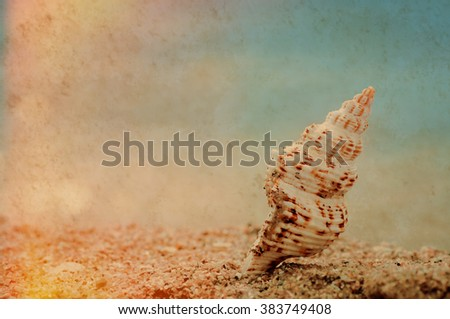 closeup tropical shell on sandy sunny beach, natural vintage summer background with paper texture - stock photo