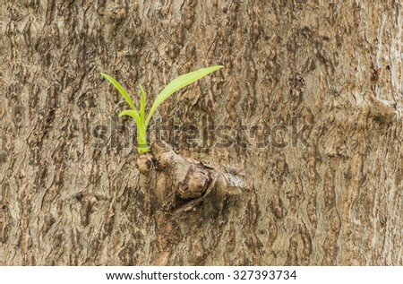 Closeup trunk of tree texture background