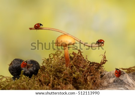 closeup two ladybugs swinging on the branch on the mushroom and two ladybugs look at them in the meadow