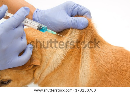 Closeup Vet giving injection the dog - stock photo