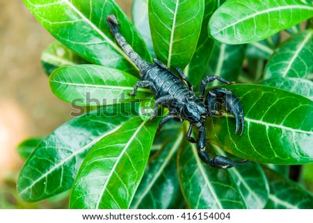 Closeup view of a scorpion in nature  - stock photo