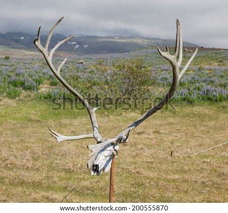 Closeup view of antlers of a huge stag over fence - stock photo