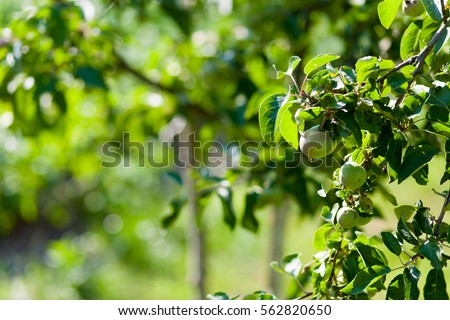 Fruit Tree Stock Photos, Royalty-Free Images & Vectors ...