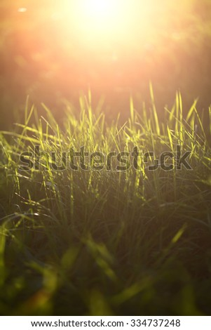 Closeup view of beautiful fresh bright green lush spring grass on meadow in sunny warm weather morning on natural background, vertical picture - stock photo