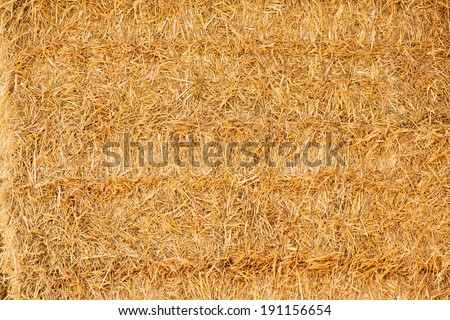 Closeup view of golden straw background - stock photo