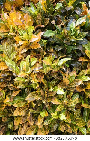 Closeup view of many bright beautiful green and yellow leaves of fresh lush stems in beautiful wild flower bed on bright natural background outdoor with no people, vertical picture - stock photo