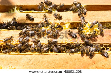 Closeup view of the working bees on honeycomb top view. Honey cells and working bees. Honeycomb with bees background. Honey frames pattern. Beekeeping